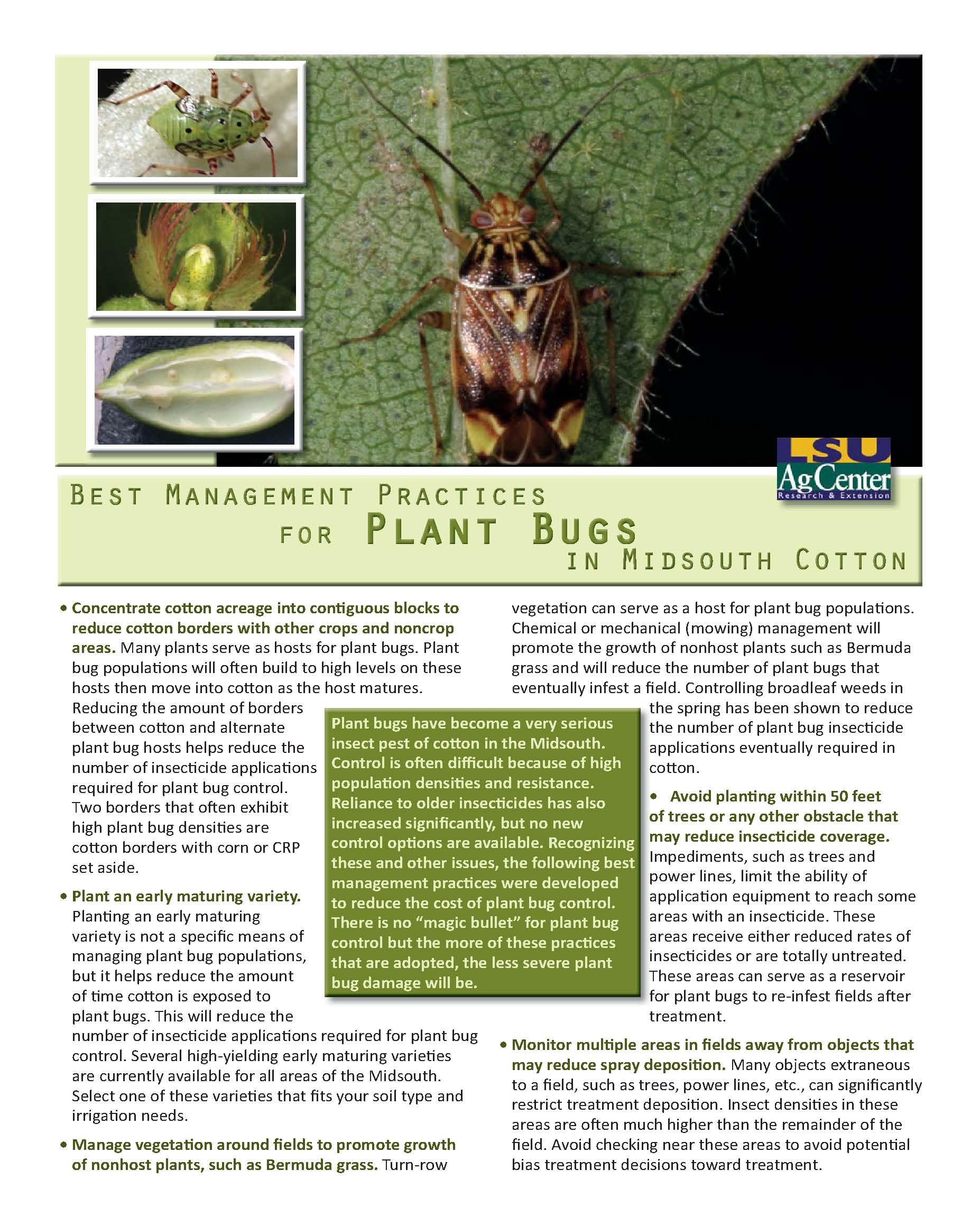 Best Management Practices for Plant Bugs in Midsouth Cotton
