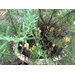 What is Growing in My Rosemary Plants Soil?