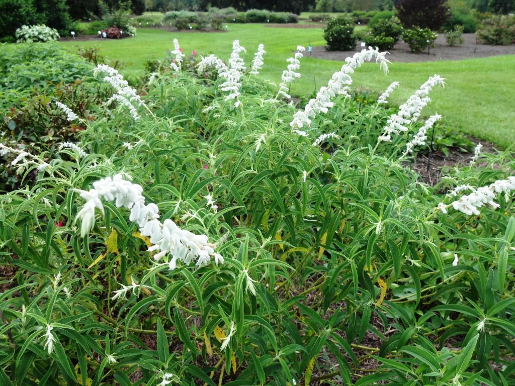 Select Plants For Late Season Color