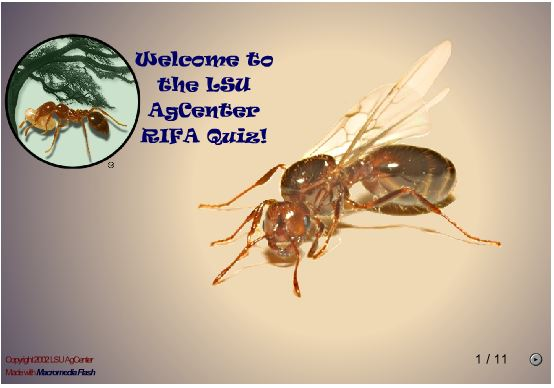 Fire Ant Quiz