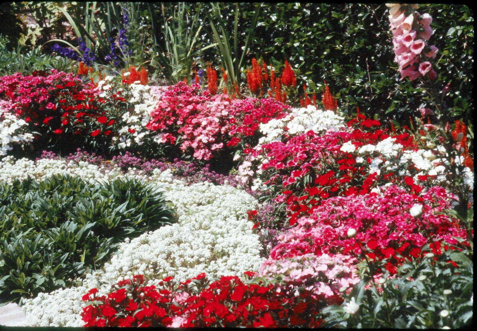 It\'s time to plant cool-season bedding plants