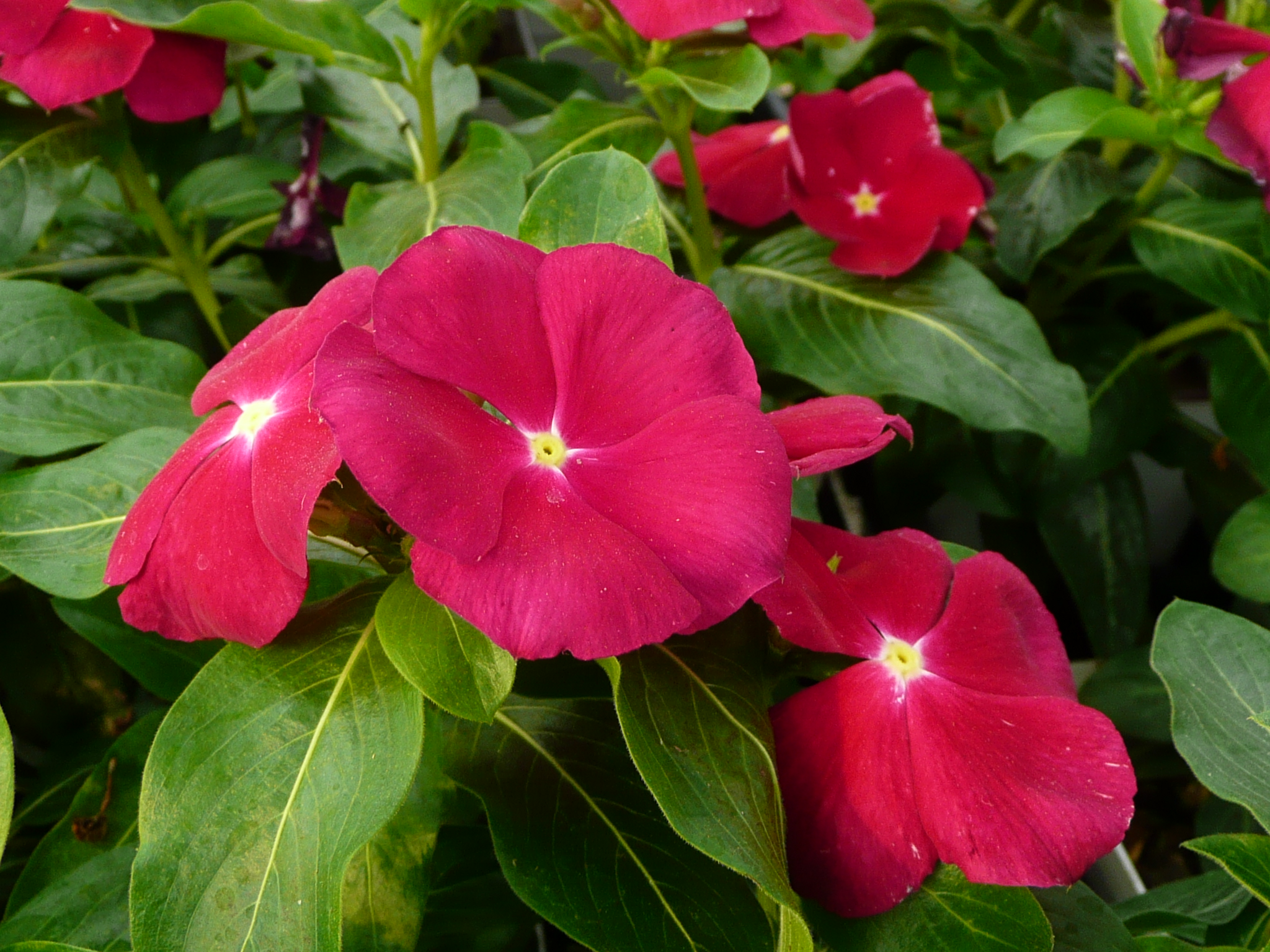 Tips offered for best bedding-plant performance