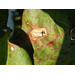 Leaf spot on rise in La. cotton fields