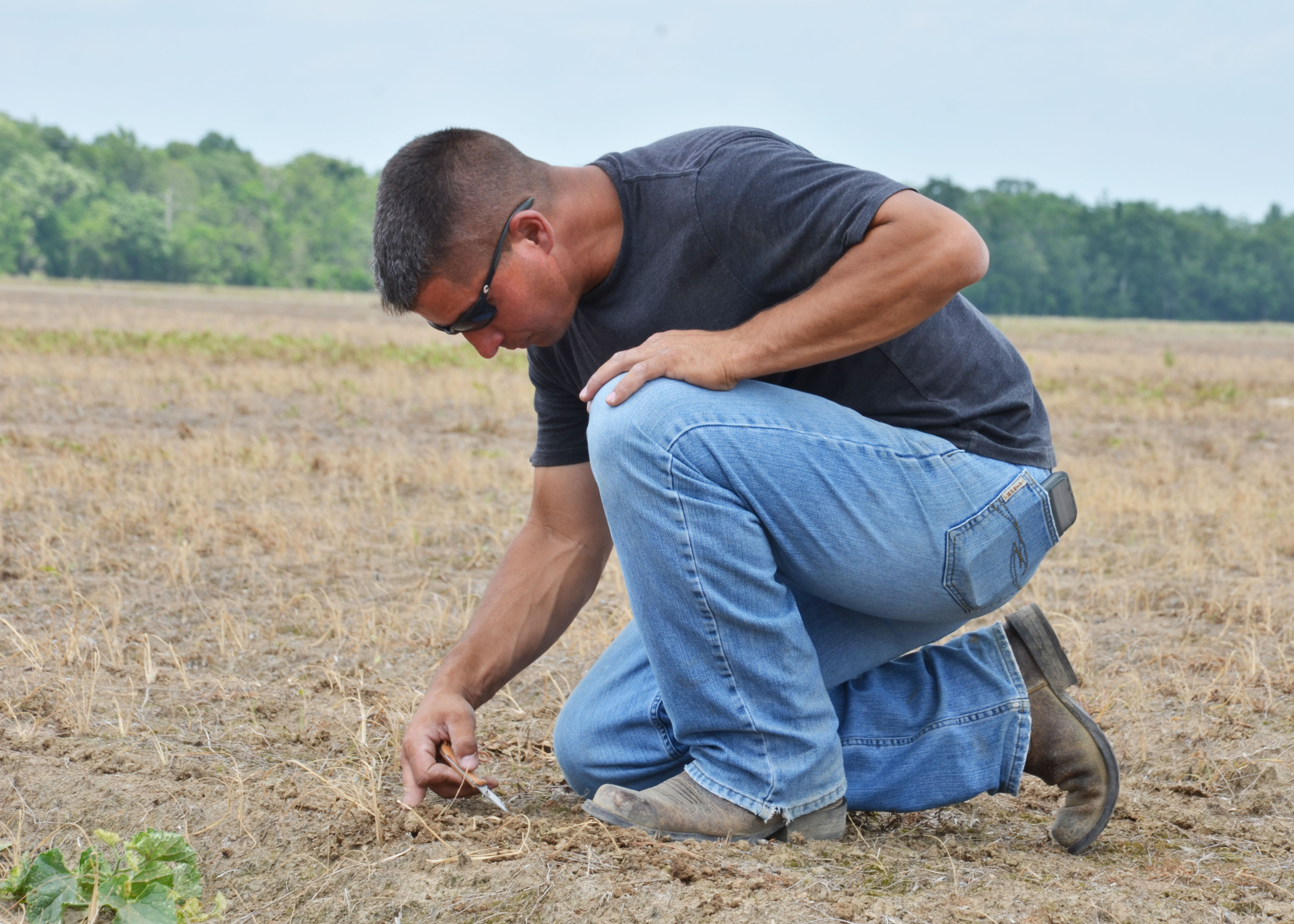 checking seed depth1.jpg thumbnail