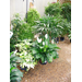 Move tender container plants inside for winter