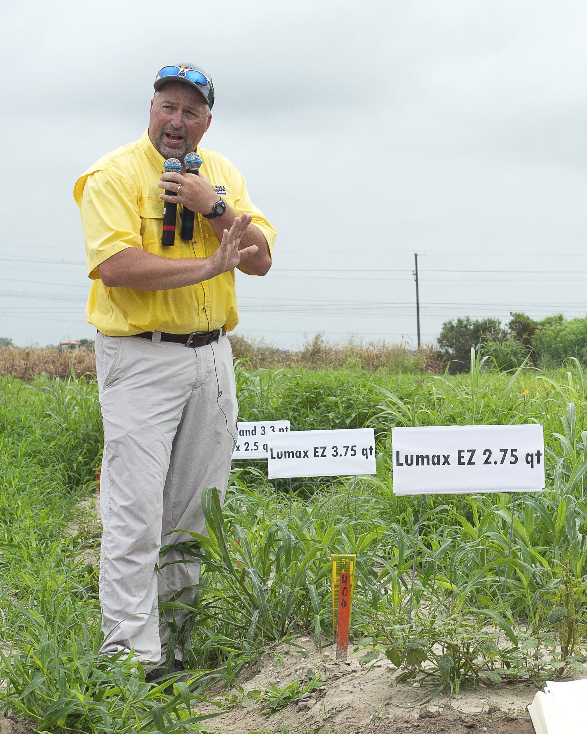 New sugarcane variety featured at AgCenter field day
