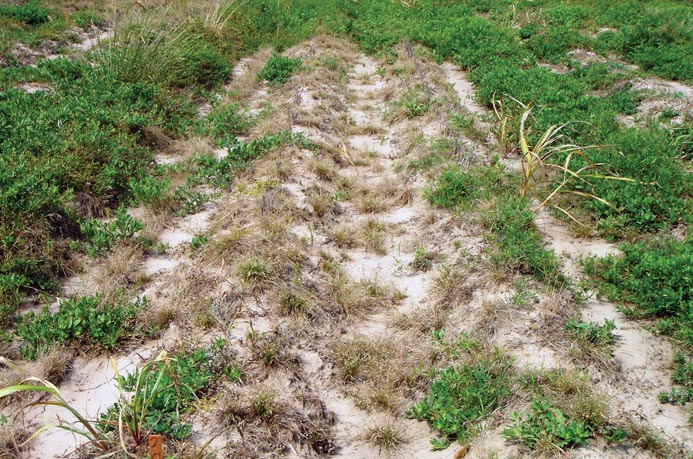 Late-fall/Early-winter Herbicide Application: A New Approach to Managing Winter Weeds in Louisiana