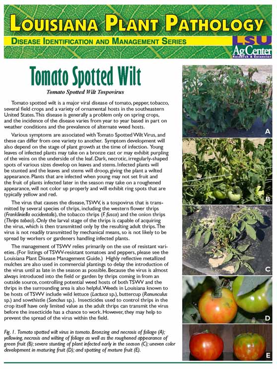 Louisiana Plant Pathology:  Tomato Spotted Wilt