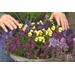 Brighten winter landscape with pots of colorful flowers