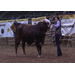 Louisiana youths participate in LSU AgCenter Livestock Show