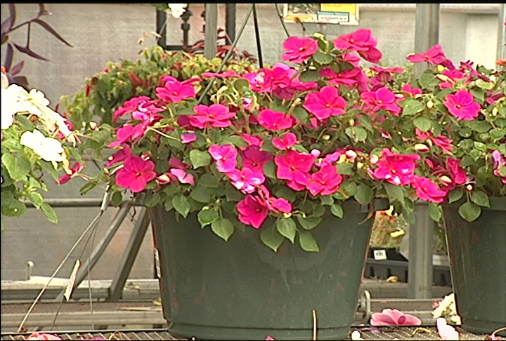 Hanging baskets add 'nice touch' to shady areas