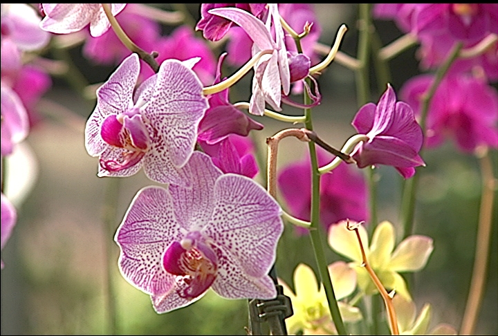 Consider growing orchids this season