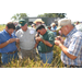 Study Of New Louisiana Rice Pest Continues