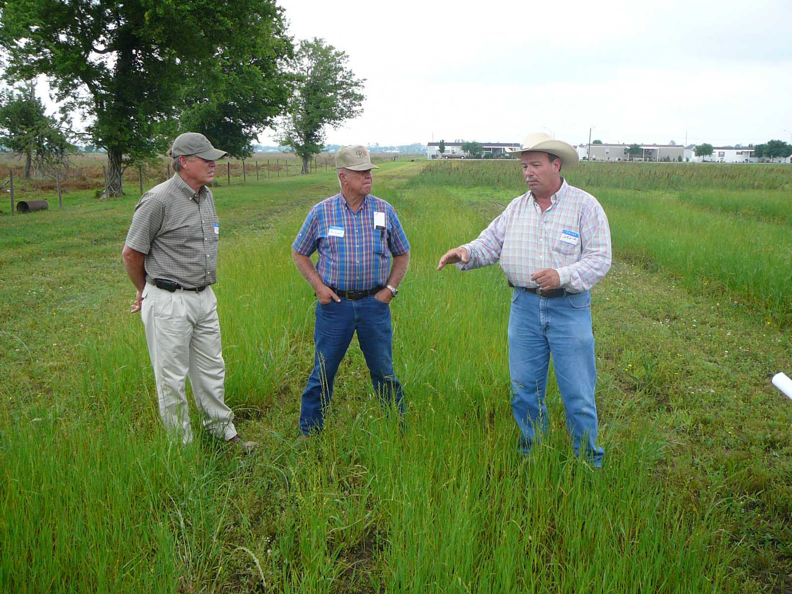 Producers Given Tips On Controlling Weeds In Pastures During Model Farm Field Day