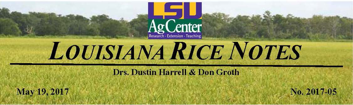 2017 Louisiana Rice Field Notes #5