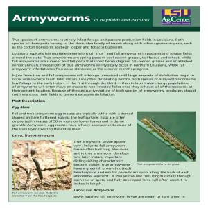 Armyworms in Hayfields and Pastures