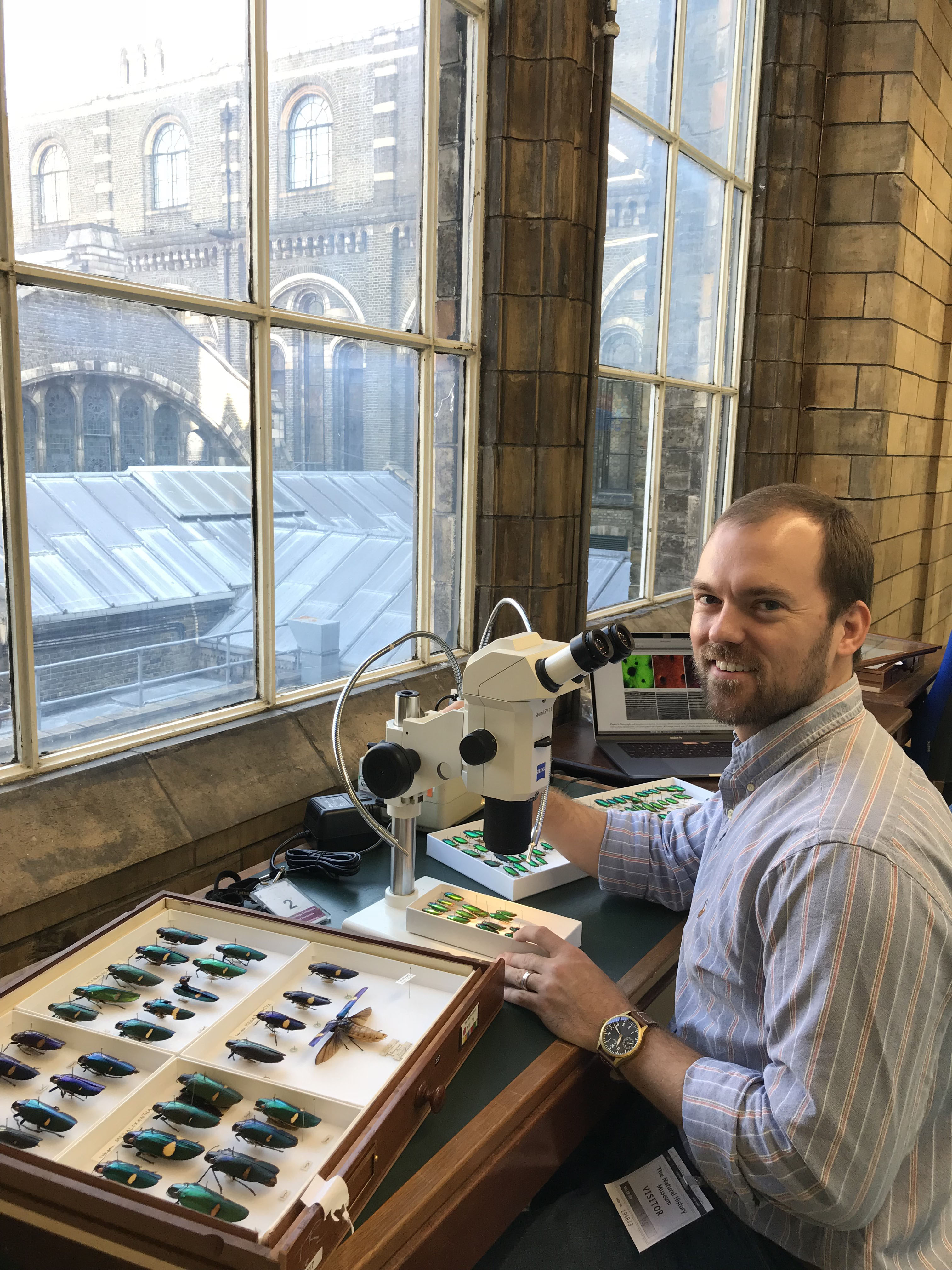 LSU AgCenter entomologist receives grant to study vision, color of jewel beetles