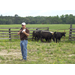LSU AgCenter beef cattle, forage field day set for March 30 in Clinton