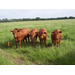 Forage Quality Basics and Beef Cattle Requirements