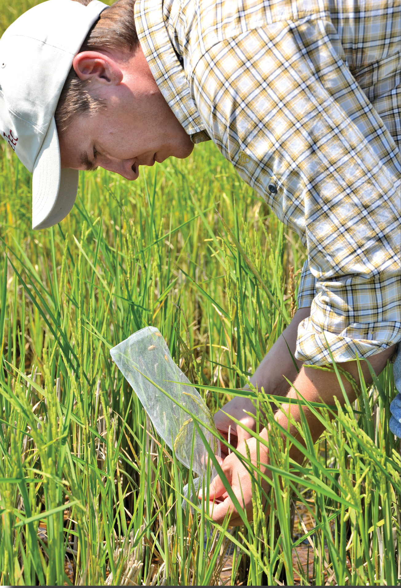 Farmers see more ways to fight pests