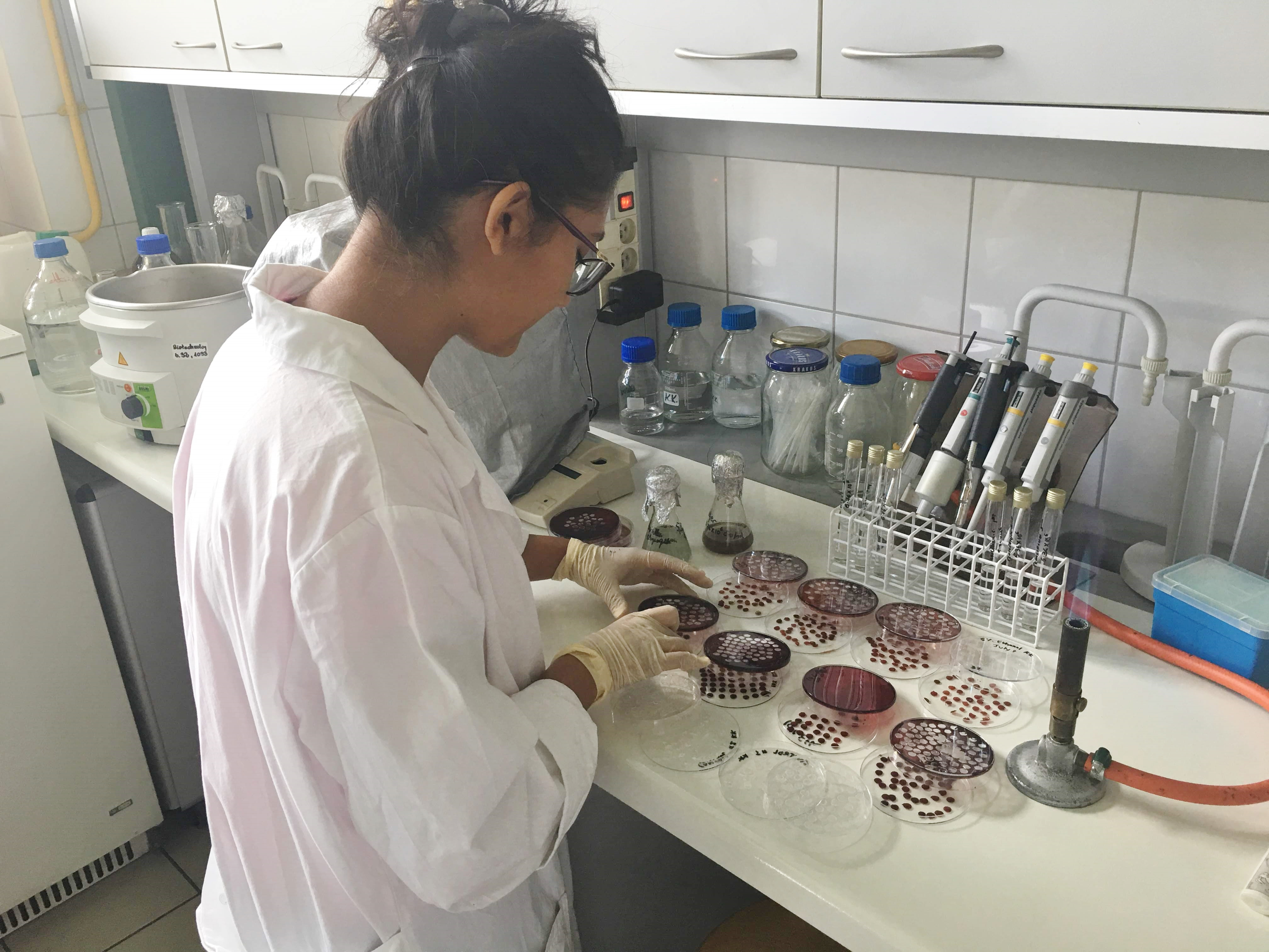 Researcher in lab preparing samples to be tested under a microscope.
