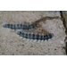 Caterpillars and Orchids
