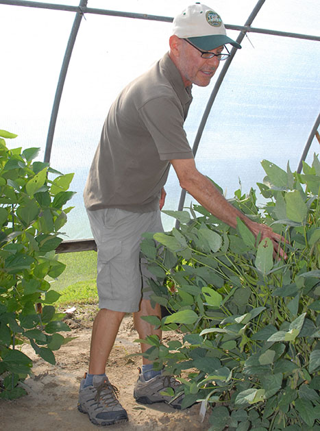 Search continues for answers to soybean diseases