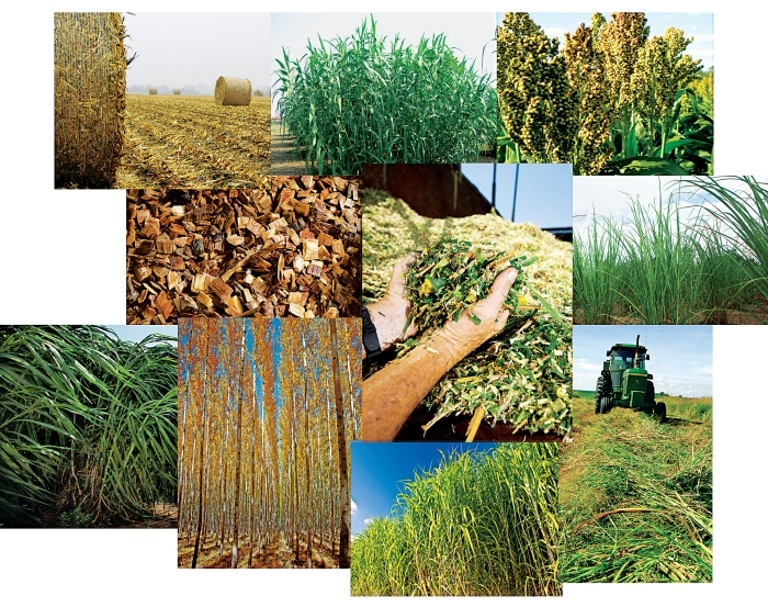 Seeking Biomass Feedstocks That Can Compete