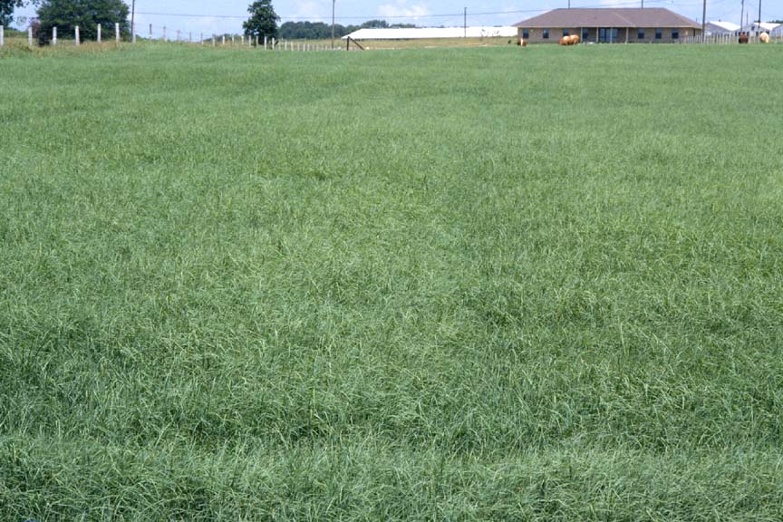 Evaluation of Grazing Methods with Bermudagrass Pastures for Stocker Production