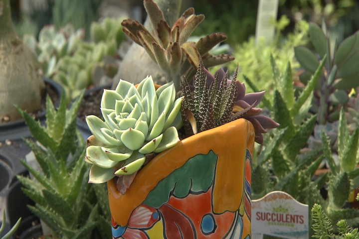 Cactus and succulents are trending