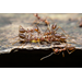Methods to Control Fire Ants in Your Yard