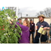 LSU AgCenter Provides Greenhouse Tomato Growers With New Ideas