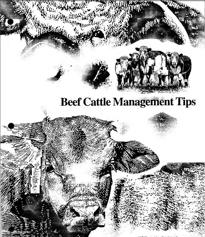 Beef Premier Exhibitor Resource