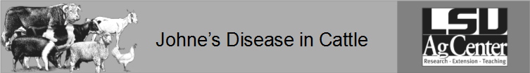 Johnes Disease in Cattle.png thumbnail