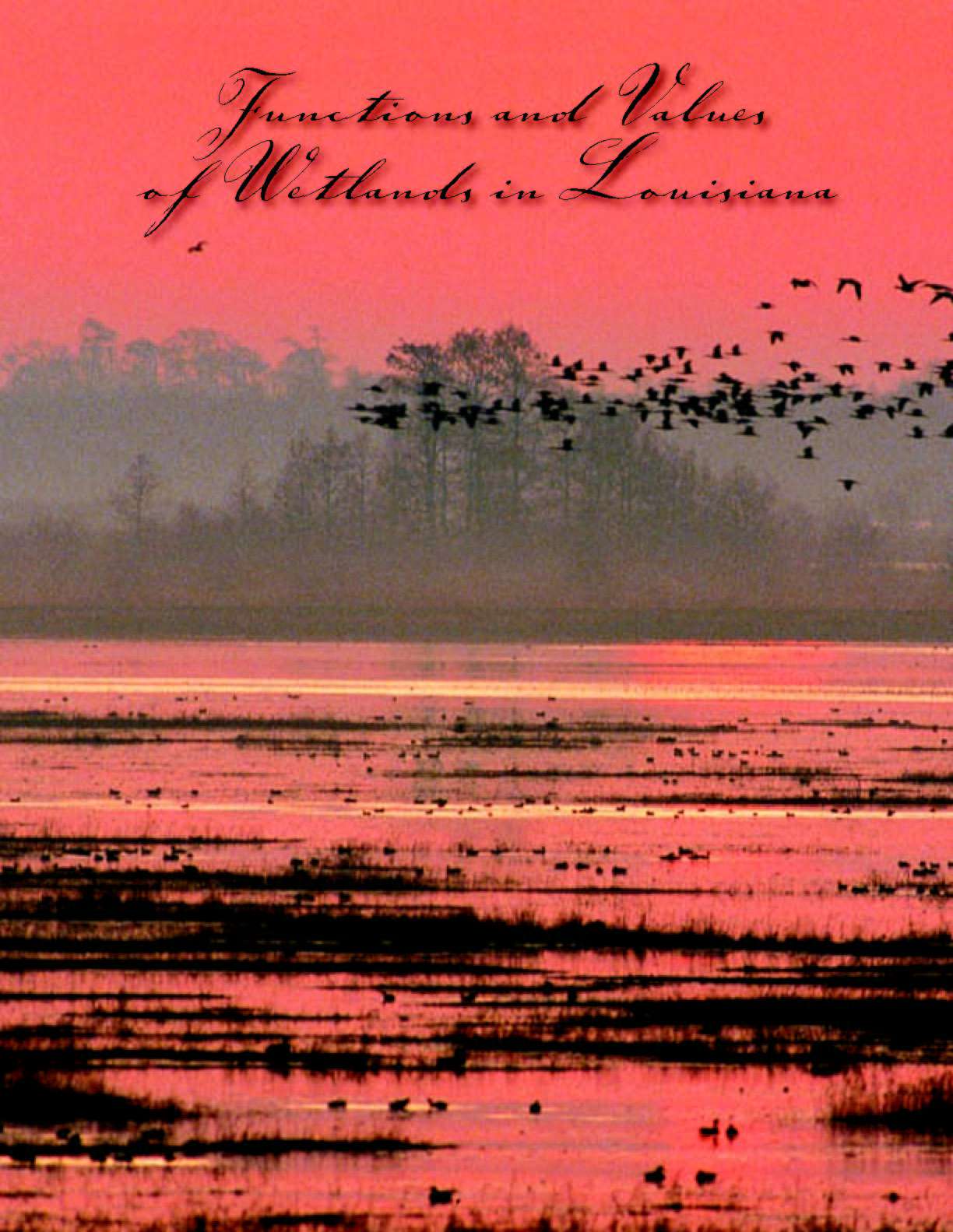 Functions and Values of Wetlands in Louisiana