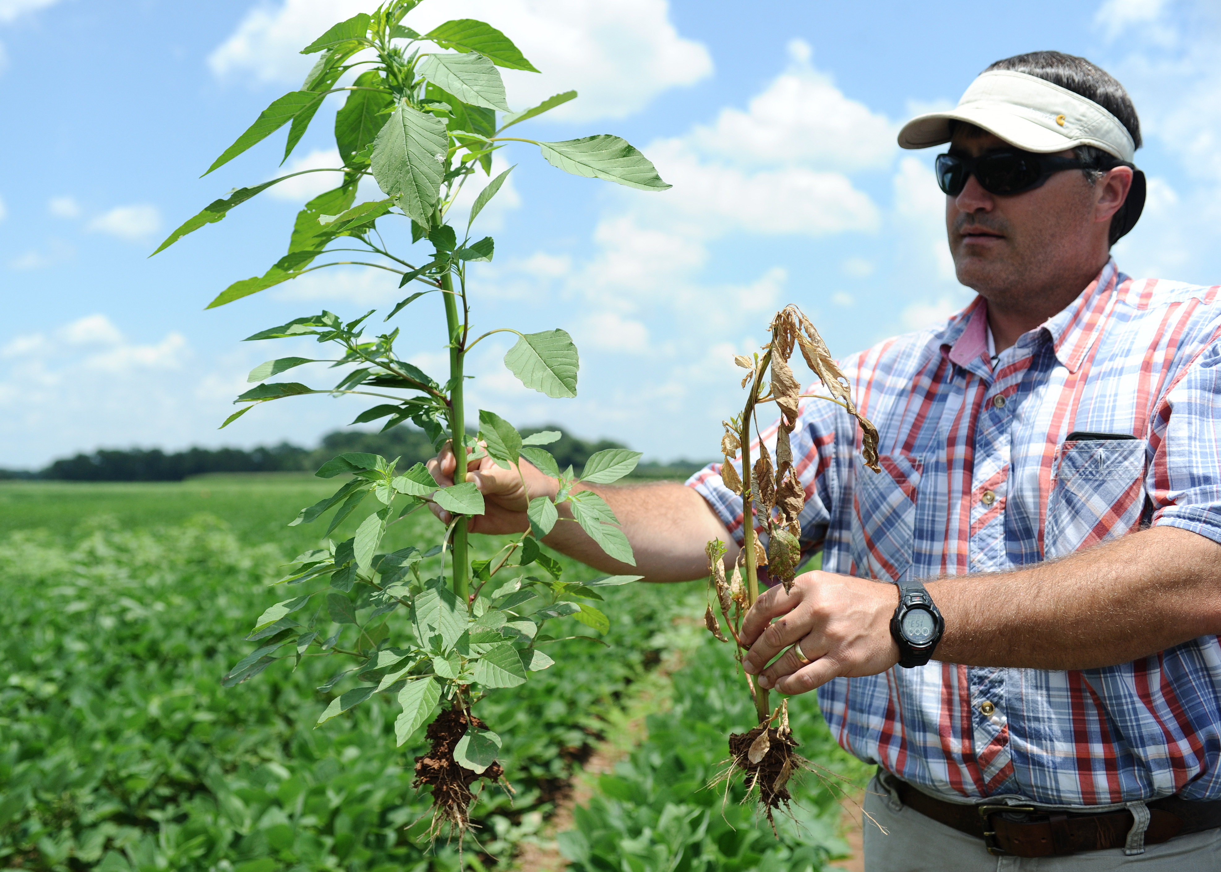 Unrelenting rains cause farmers major weed problems