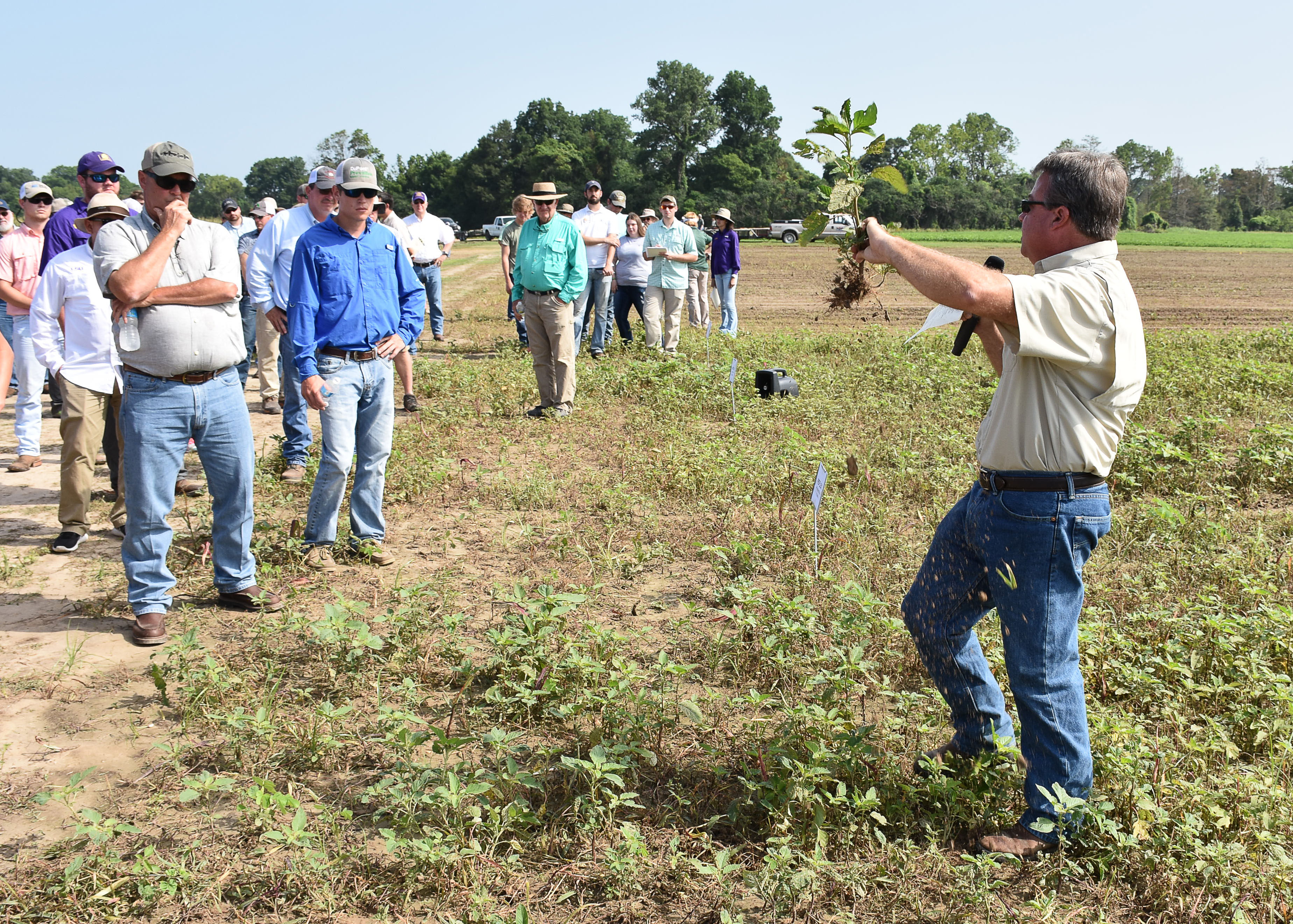 LSU AgCenter Northeast Research Station field day set for June 20