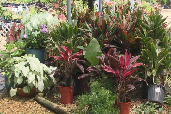 Sprucing up shady spots with the right plants