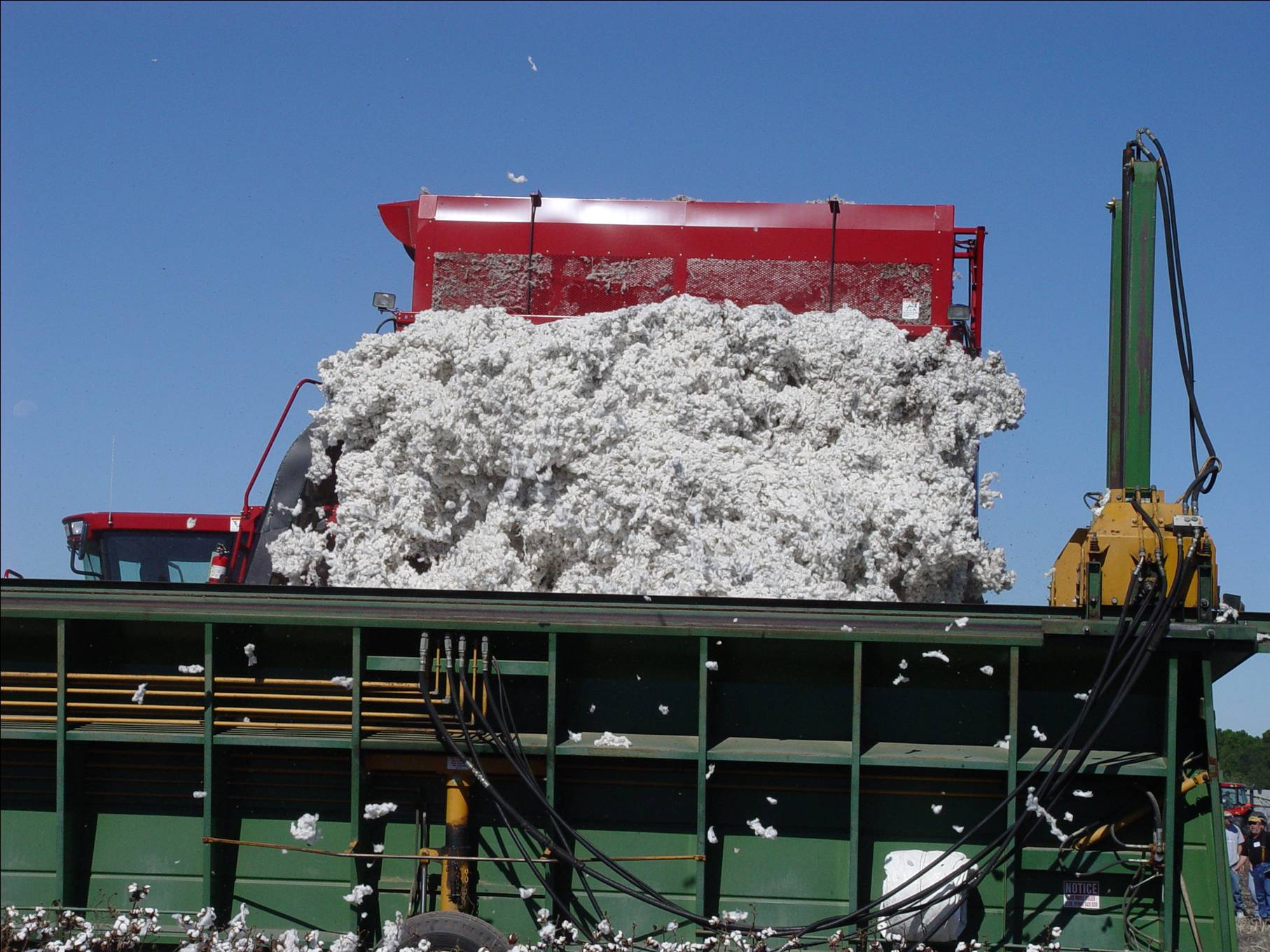 2004 Cotton Varieties for Louisiana