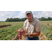 Sweet Potato Research Station virtual field day features newest varieties, improved techniques