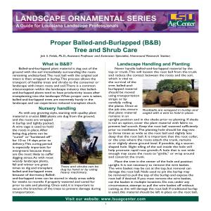 Proper Balled-and-Burlapped (B&B) Tree and Shrub Care