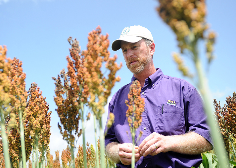 Trey Price, a plant pathologist with the LSU AgCenter