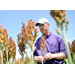 Odds are low for grain sorghum disease, but still scout