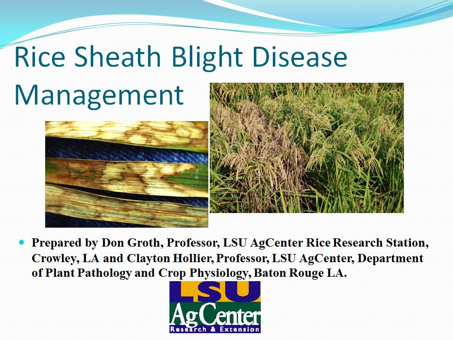 Rice Sheath Blight Disease Management 2012