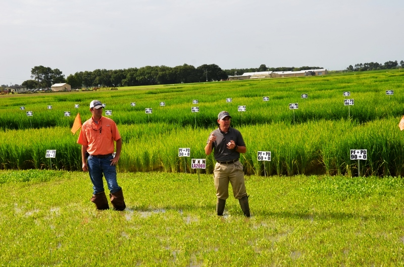 Highlights of the Rice Research Station Field Day - Part II