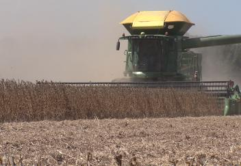 Louisiana soybean harvesting ongoing