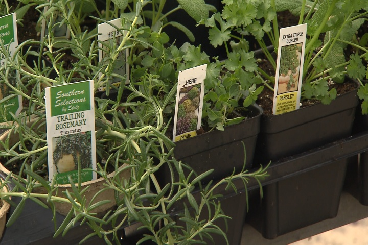 March is a great time to plant herbs in Louisiana