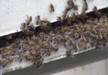 Beekeepers need to monitor health of their hives
