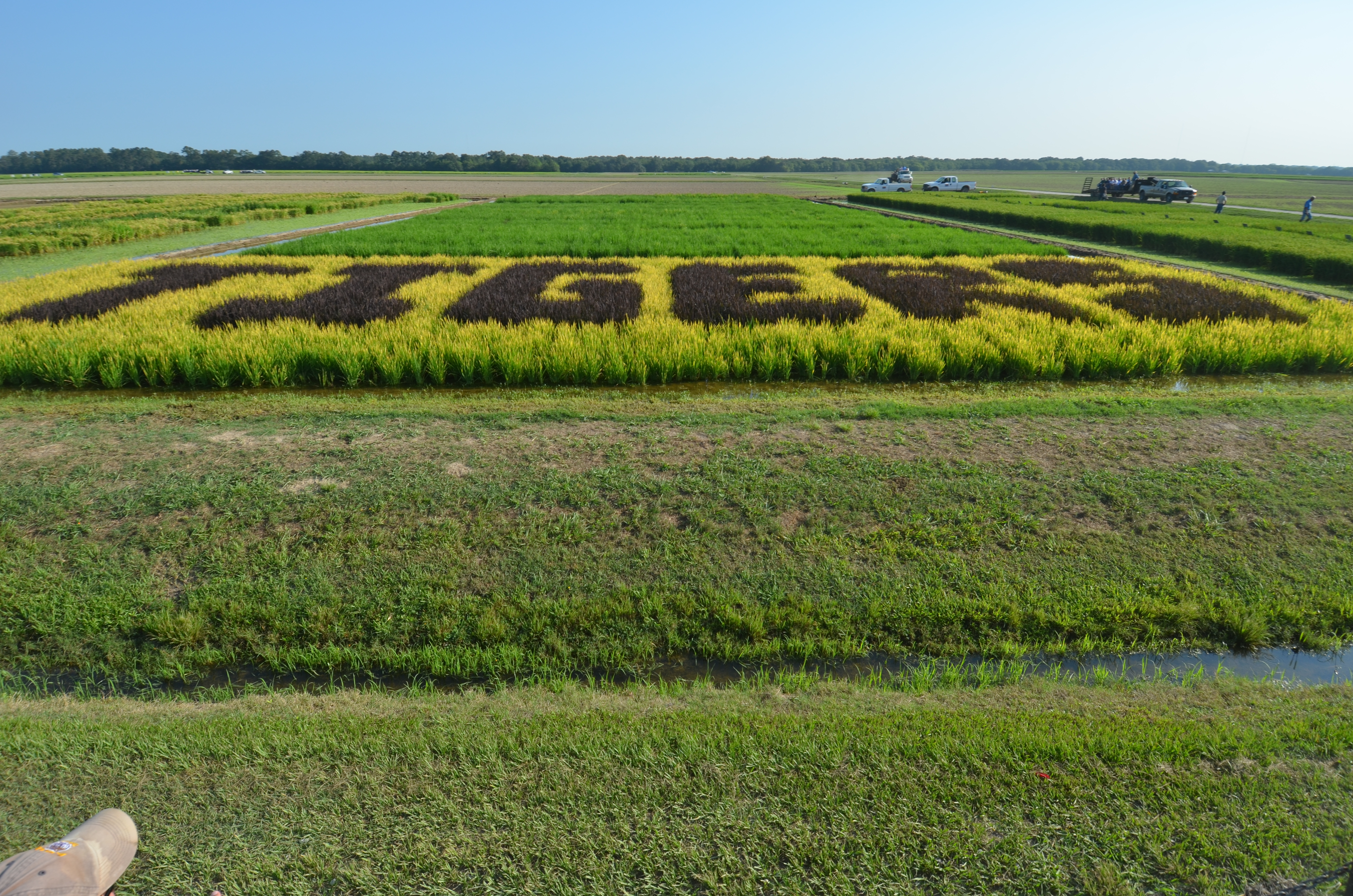 Highlights of the 2011 Rice Field Day Tour