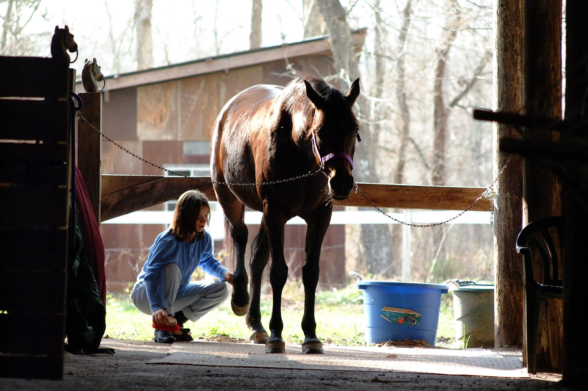 Horse Expert Lists Benefits of Horse Ownership